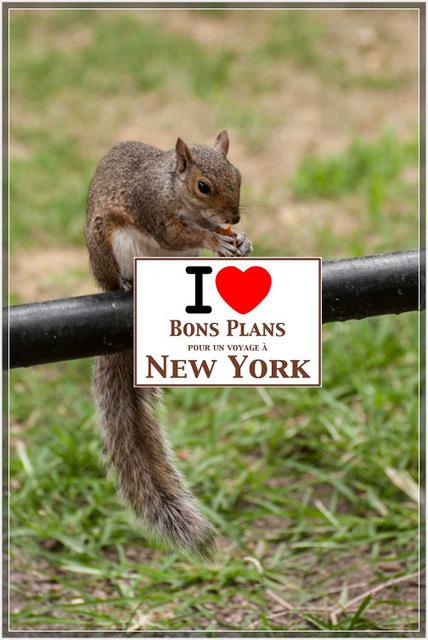 Zazie nous fait profiter de la rencontre d'un petit New Yorkais sur Union Square qui a accepté de poser pour elle - Août 2012