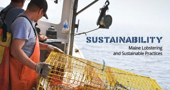 website_sustainability_updated