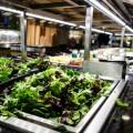 whole-foods-market-new-york-40