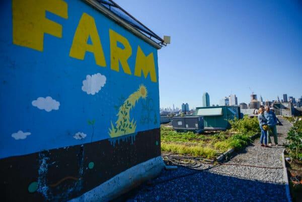 brooklyn-grange-farm-queens-15