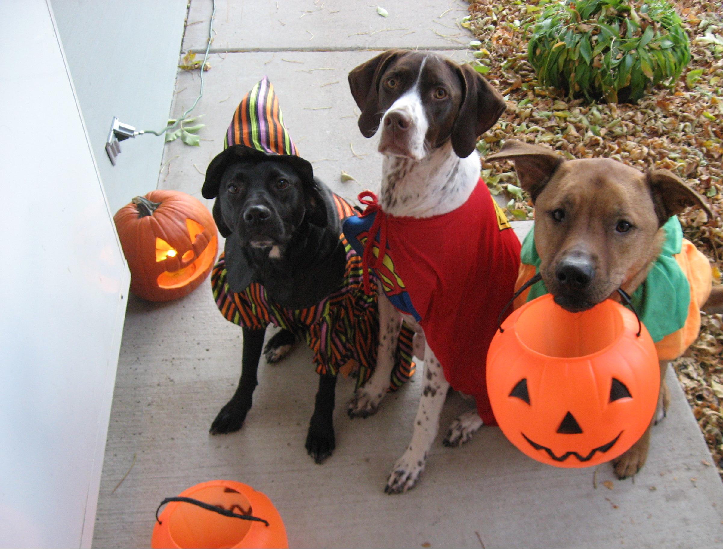 Que faire et o f ter halloween new york - Best dogs for small spaces pict ...
