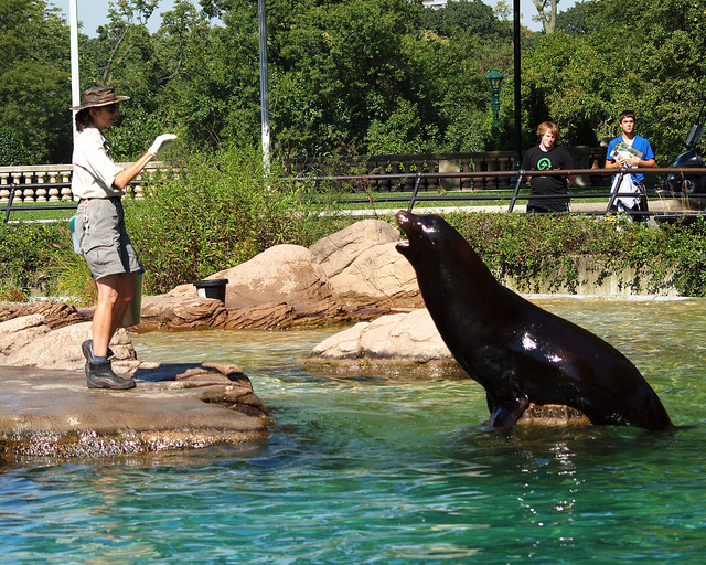 bronx-zoo-sea-lion-feedings