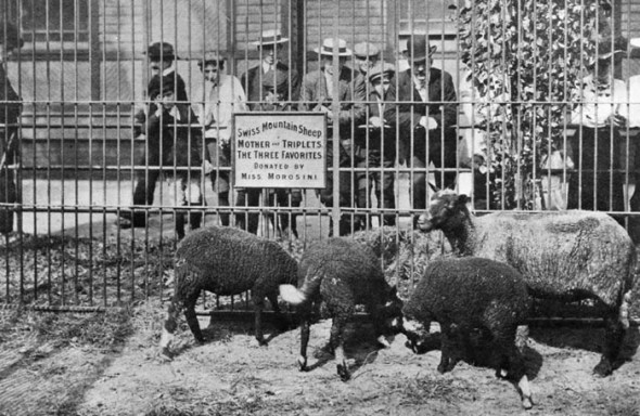 zoo central park 1935