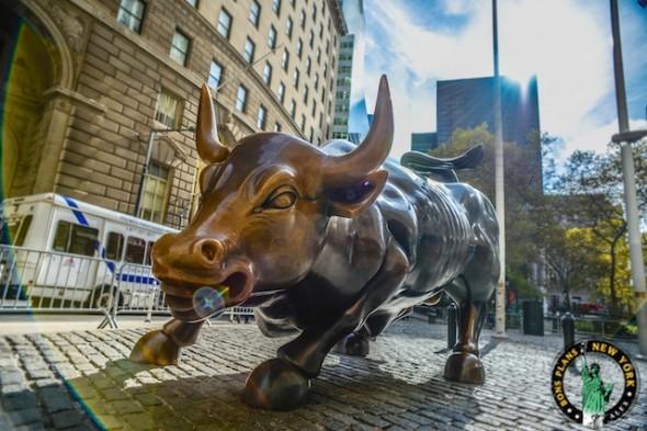 En novembre 2013, juste après le passage de Sandy, Charging Bull est toujours là !!! Alex les bons plans