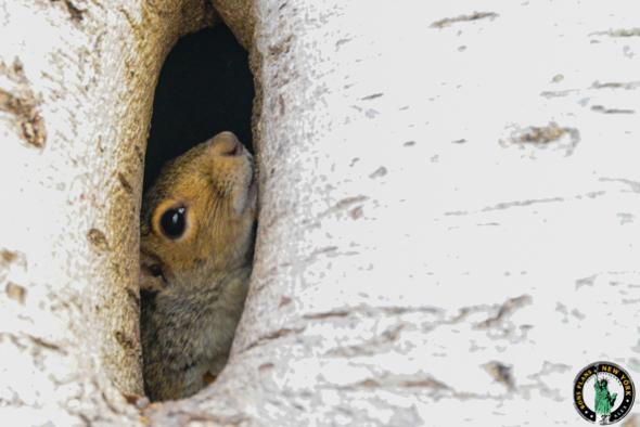 Un écureuil à Central Park - Novembre 2012 - Alex les bons plans