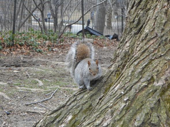 Un écureuil à Central Park - Dana