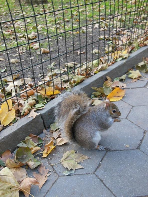 Pour la petite histoire, l'écureuil mange un M&M's (de Times Square of course!) parce qu'on voulait voir si il allait s'approcher et on avait que ça dans nos sacs! Il a adoré!!! - Photo prise le 09/11/2012 - Viny