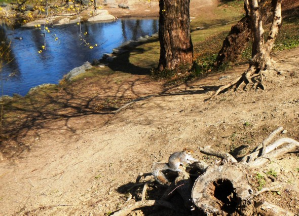 Voici 2 petites photos d'écureuils que j'ai prises le 4 avril 2013 lors du Photo Trek Tour que j'avais réservé avant de partir (2 heures de promenade avec un guide privé et 168 photos). - Evelyne