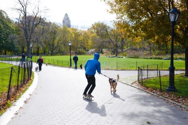 central-park-skate