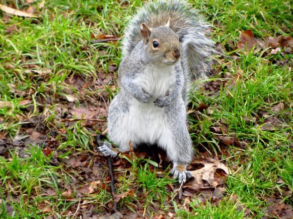Central Park décembre 2012. Prise par Leslie B.