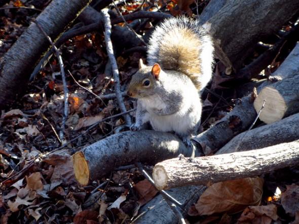 Central Park décembre 2011. Prise par Leslie B.