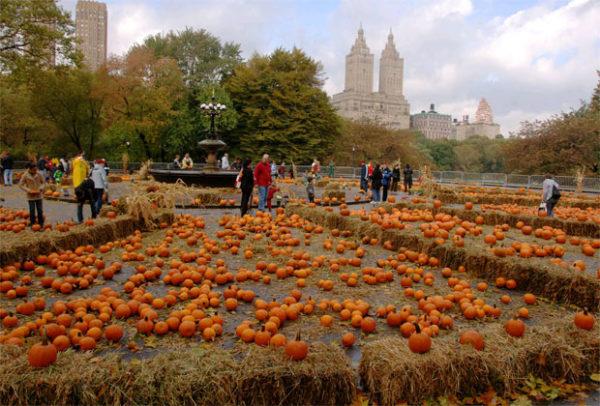 Central-Park-Pumpkin-Festival