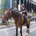 Un policier NYPD sur son cheval - Pascal (Août 2012)