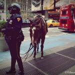 Une policère du NYPD et son cheval - Pocahantas