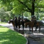 Police montée 1 dimanche à central park - Gaelle