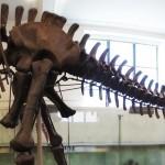 dinosaure-American-Museum-Natural-History-10