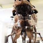 dinosaure-American-Museum-Natural-History-11
