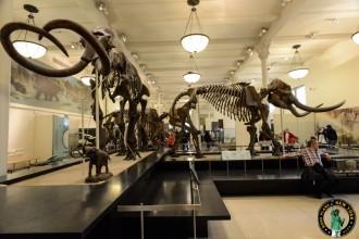 dinosaure-American-Museum-Natural-History-2