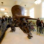 dinosaure-American-Museum-Natural-History-4