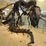 dinosaure-American-Museum-Natural-History-5