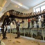 dinosaure-American-Museum-Natural-History-6