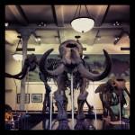 dinosaure-American-Museum-Natural-History-8