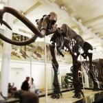 dinosaure-American-Museum-Natural-History-9