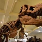 t-rex-American-Museum-Natural-History