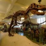 t-rex-American-Museum-Natural-History-2