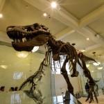 t-rex-American-Museum-Natural-History-3