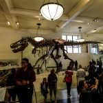 t-rex-American-Museum-Natural-History-4