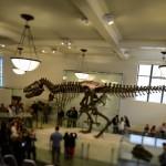 t-rex-American-Museum-Natural-History-5
