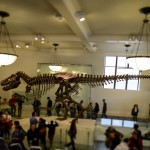t-rex-American-Museum-Natural-History-6