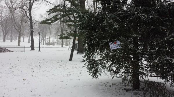 Dédicace de Smain sur un sapin de Central Park - Janvier 2014