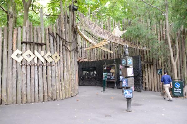 congos-zoo-bronx-nyc
