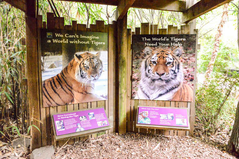 tigre-zoo-bronx-nyc-19