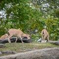 zoo-bronx-nyc-10