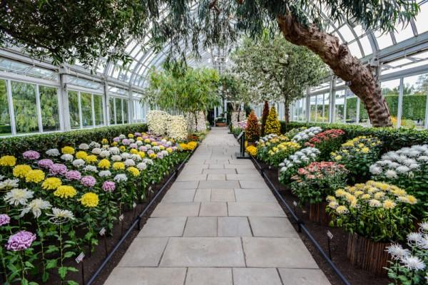 jardin-botanique-new-york-18