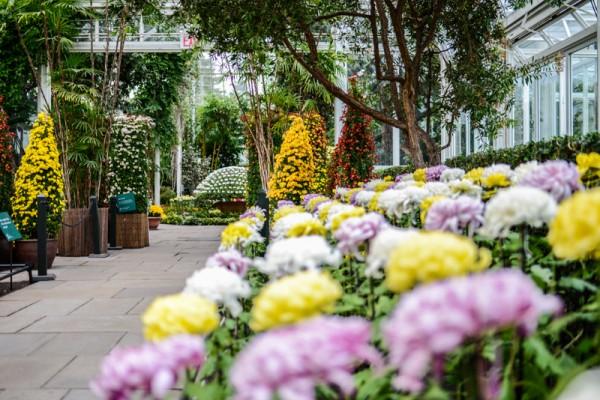 jardin-botanique-new-york-23