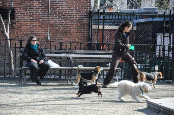 chiens-new-york-15