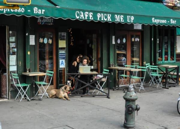 chiens-new-york-16