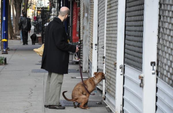 chiens-new-york-17