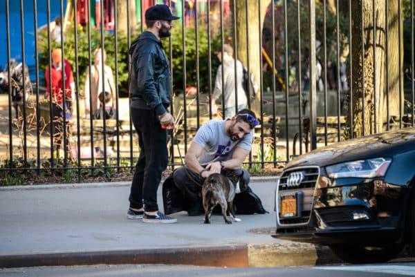 chiens-new-york-25