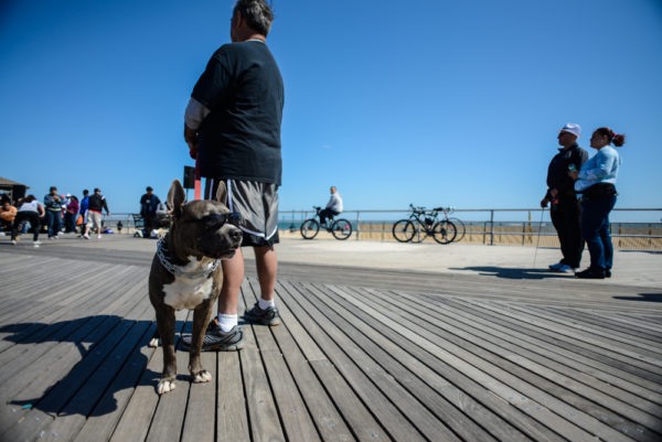 chiens-new-york-27