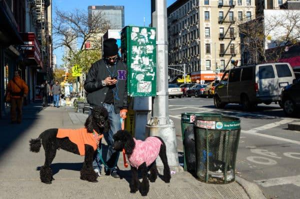 chiens-new-york-28