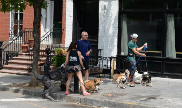 chiens-new-york-29