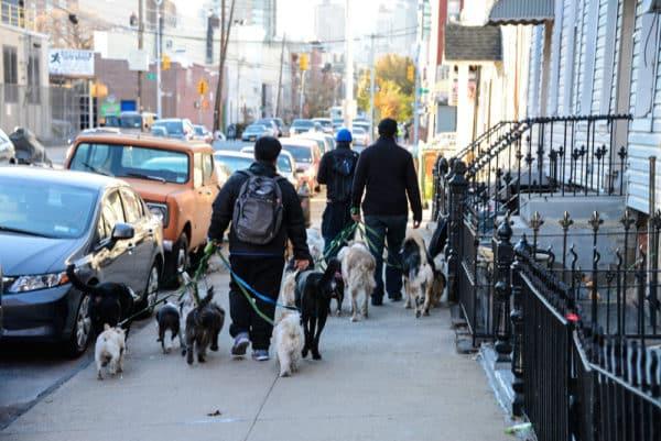 chiens-new-york-32
