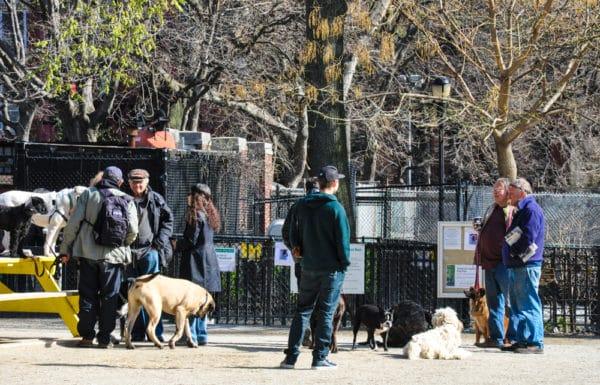 chiens-new-york-36