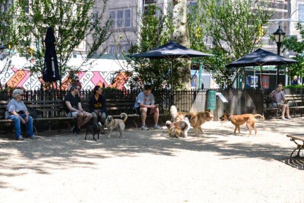 chiens-new-york-4