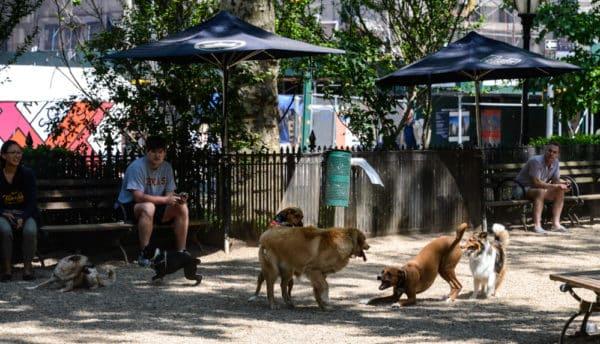 chiens-new-york-5